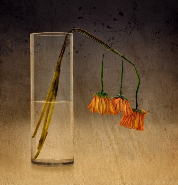 A Slow, Lonely Death by Joe Bonita, f16 Color, Score: 10