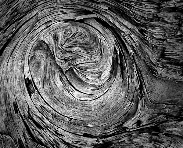 Decaying Wood by Oz Pfenninger, f16 Monochrome, Score: 10