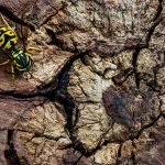 Tree Rings and Wasp by Danny Lam, f16 Color, Score: 9