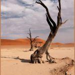 500 Year Dead Tree by Nancy Myer, f16 Digital, Score: 10
