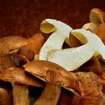 Shrooms by Joe Bonita, f16 Color, Score: 10