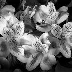 Bouquet by John Grevillius, f11 Digital, Score: 9