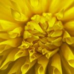 Delightful Dahlia by Gigi Embrechts, f11 Digital, Score - 10