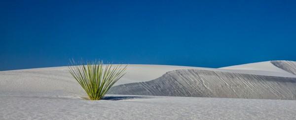 Desert Lines by Butch Mazzuca, f11 Digital, Score: 9