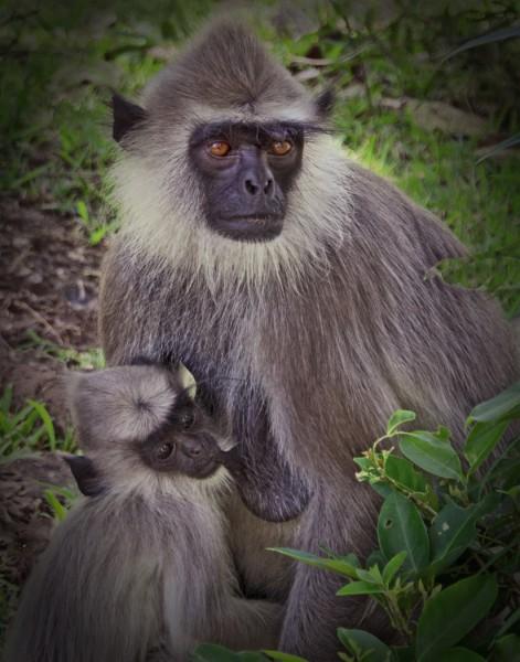 Nursing Monkey Mother by Laura Moran, f5.6 Digital, Score: 10