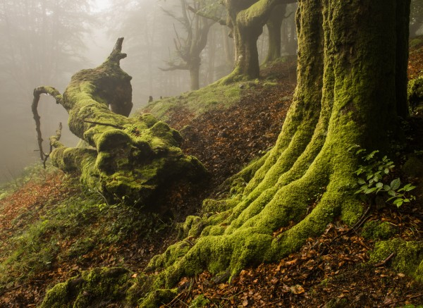 The Enchanted Wood by Scott Wilson, f16 Digital, Score: 9