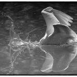 Splash by Gwen Piña, f11 Digital, Score: 10