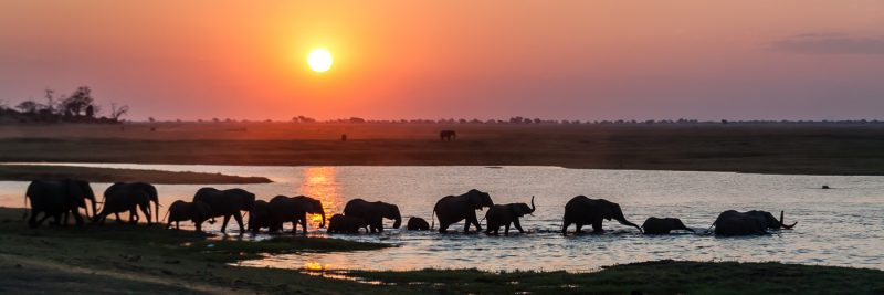 Elephant Parade by Brian Donovan, f16 Digital, Score: 10