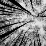 Converging Trees by Oz Pfenninger, 1st f11 Monochrome