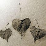 Nature's Valentine by Judy Kahn, F5.6 Digital, Score-10