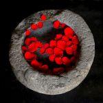 Floating Rose Petals by Oz Pfenninger, F11 Color, Score-9