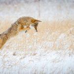 Hunting by Brian Donovan, f11 Digital, Score: 10