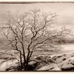 Winter Tree at Red Rocks by Nancy Myer, f16 Digital, Score: 9