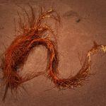 Sand Serpent by Oz Pfenninger, f16 Digital, Score: 9