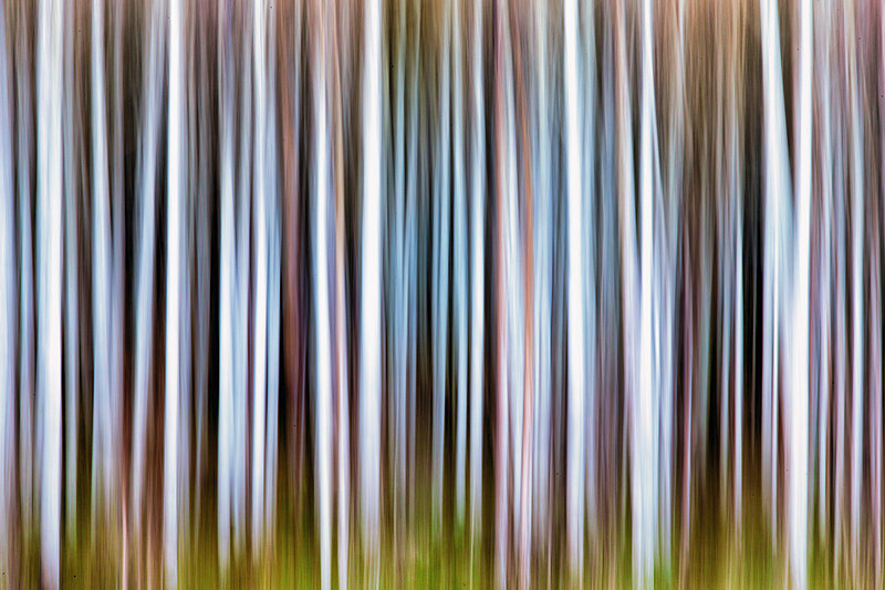 Aspen Grove by Butch Mazzuca, f16 Digital, Score: 9