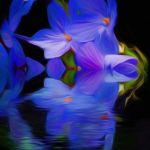 Modern Reflection by Leander Urmy, f16 Digital, Score: 10