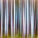 Aspen Grove by Butch Mazzuca, f16 Digital, Score: 9