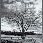 Tree in the Gardens – Spring by Nancy Myer, F16 Digital, Score-9