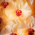 Orchids by A.J. Spong, f11 Digital, Score: 9
