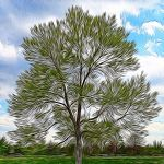 Jubilant tree in the Park by Nancy Myer, f16 Digital, Score: 10