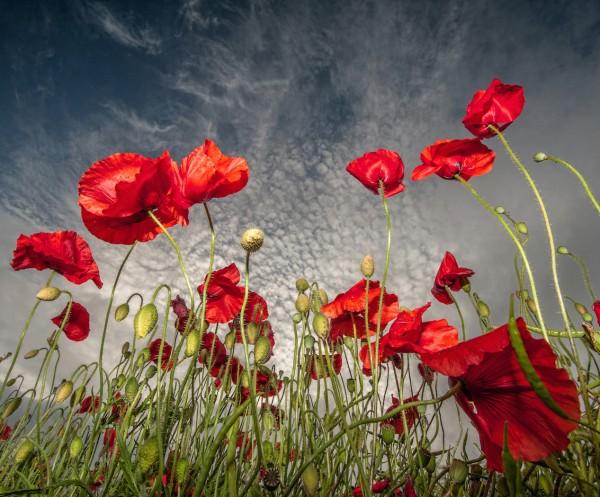 Rojo by Scott Wilson, f16 Digital, Score: 10