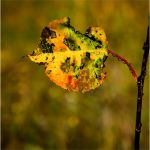 A Leaf of Color by Leander Urmy, f16 Digital, Score: 10