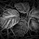 Winter's Breath by Oz Pfenninger, f16 Digital, Score: 10