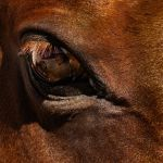 Equine Reflection by Larry Hartlaub, f5.6 Digital, Score: 10