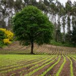 Time to Grow by Dave Hull, f5.6 Digital, Score: 9
