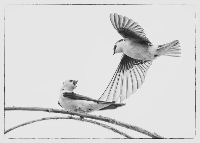 Get off my branch by Tom Polys, f8 Digital, Score: 10