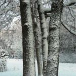 Winter Trees by Tom Aguilar-Downing, f5.6 Digital, Score: 9