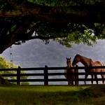 A Quiet Moment by Ken Farman, 1st f11 Digital
