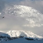 Antartic Awe by Joe Bonita, 1st f16 Digital