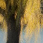 Impressions of a Wind Tossed Weeping Willow by Nancy Myer, 2nd f11 Digital