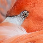 Birds Eye View by Gwen Pina, 1st f5.6 Color