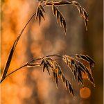 Backlit and Bokeh by Leander Urmey, HM f11 Digital
