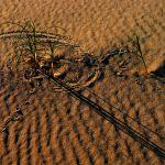 Sand Dune Detail by Oz Pfenninger, 3rd f11 Digital
