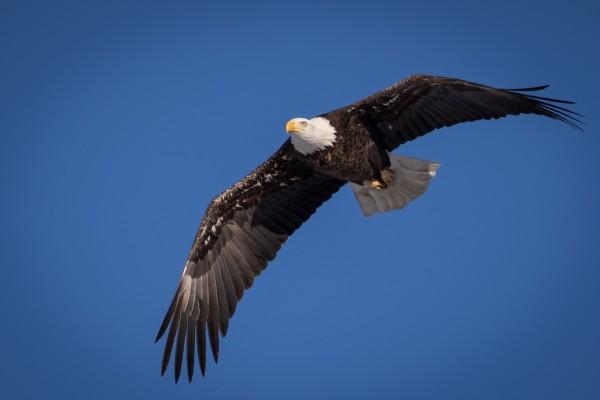 Majesty in Flight by Brian Donovan, f16 Digital, Score: 10