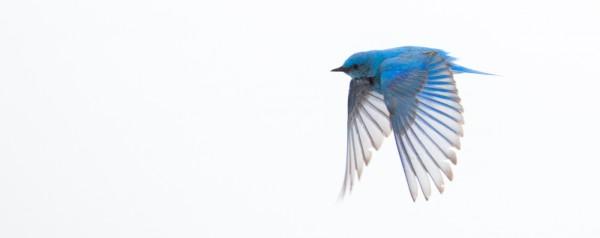Feeling Blue by Gwen Piña, f11 Digital, Score: 9