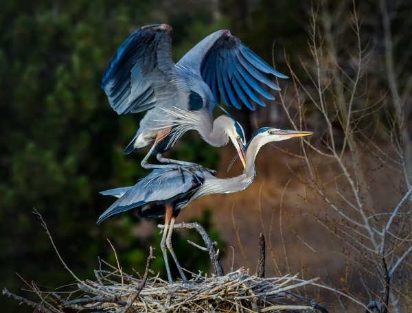 Mating time by Leander Urmy, f16 Digital, Score: 10