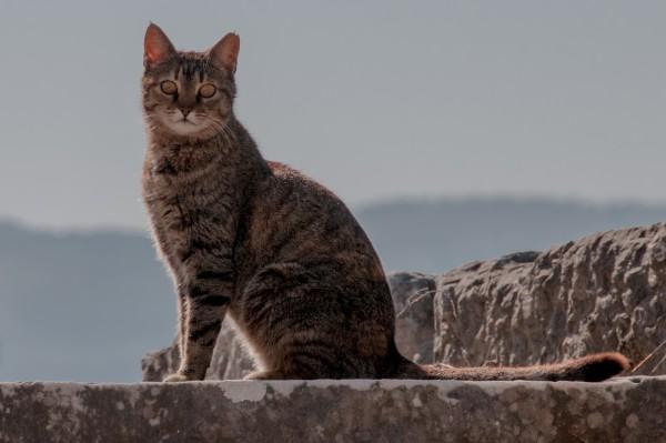 Rodent Patrol at Ephesus by Nancy Myer, f16 Digital, Score: 9