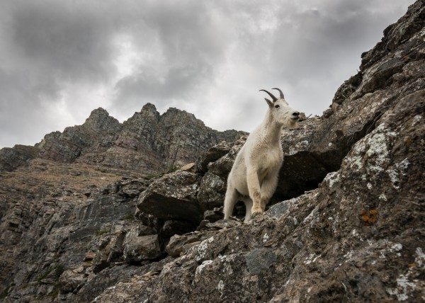 King of the Mountain by Cliff Stockdill, f5.6 Digital, Score: 9