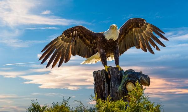 Majestic by Danny Lam, f16 Digital, Score: 10