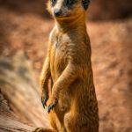 The Lookout by Nick Hemenway, f11 Digital, Score: 10
