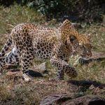 The Stalk by Butch Mazzuca, f16 Digital, Score: 9