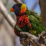 Pretty Bird by Laura Moran, f5.6 Digital, Score: 10
