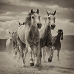 On the Move by Mary Paetow, f16 Digital, Score: 10