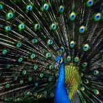 Eye Candy by Travis Broxton, f16 Digital, Score: 10