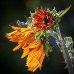 A Kiss of Autumn by Gwen Piña, f8 Color, Score: 9