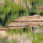 Alpine Impression by Ron Schaller, f8 Digital, Score: 9